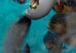 Piranhas designed with 3D ANIMATION and RIG for Bank of Cyprus Picture 3